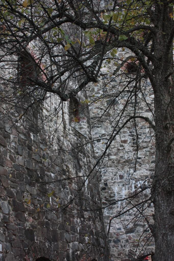 itaiselta-pihalta-puunoksat